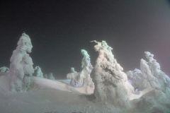 snow_mox.jpg
