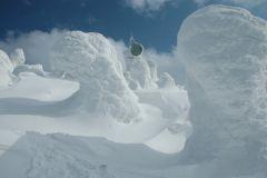 snow_moo.jpg