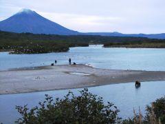 Медвежья рыбалка в районе Курильского озера. Камчатка.jpg