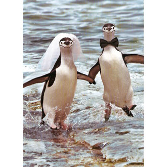 card avanti penguinwedding