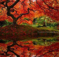 Японский сад 28