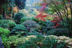 Японский сад 19