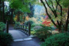Японский сад 17