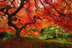 Японский сад 27