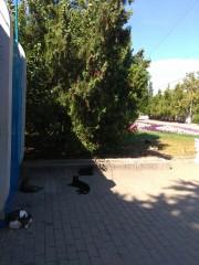 Севастопольские котики напротив штаба ЧФ