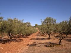 И опять оливки