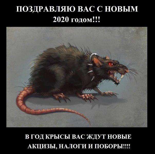 ГОД_Крысы2020.jpg