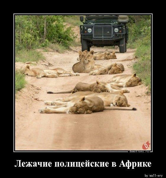 64511521911155_Lezhachie-policeyski_demotions.ru.jpg