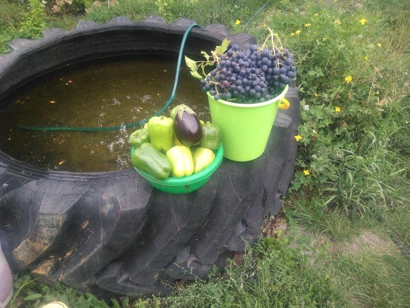 урожай_2020.jpg