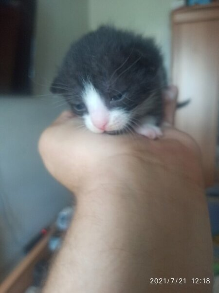 котенок.jpg